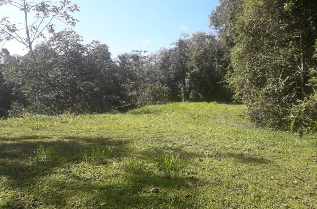 Lots Selva Encantada