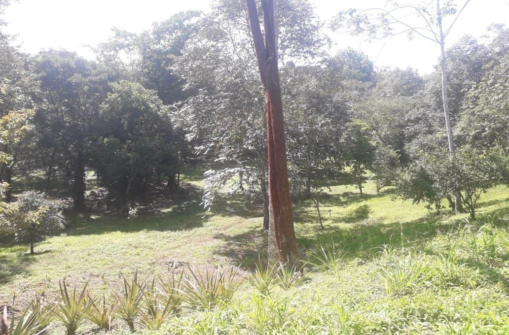 selva-encantada-lot